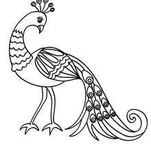 Desenho de um lindo Pavão para colorir
