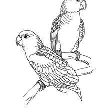 Imagem de um Papagaio para colorir