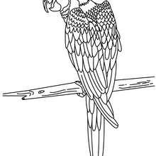 Um Papagaio para colorir online