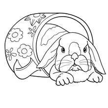 Desenho de um coelho dentro de uma xícara para colorir