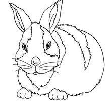 Desenho de um coelhão para colorir