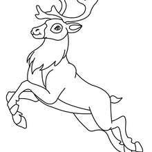 Gravura de uma rena para colorir