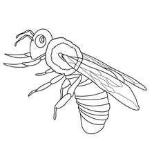 Uma abelha para colorir