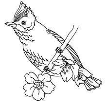 Um pássaro para colorir