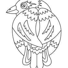 Desenho de um passarinho para colorir