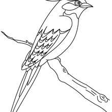 Desenho de um passarinho para colorir online