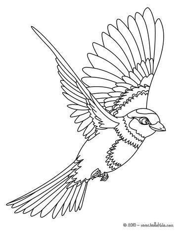 Desenho de um lindo pássaro voando para colorir