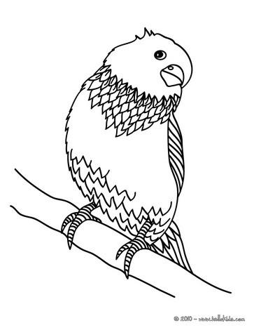 Desenho de um Periquito para colorir