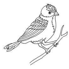 Desenho de um pássaro sentado num galho para colorir