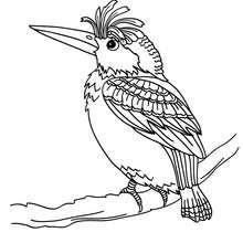 Desenho de um Pica-pau para colorir