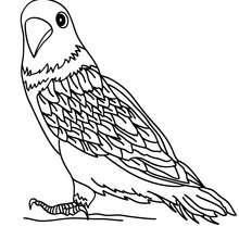 Desenho de um Periquito para colorir online