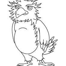 Uma coruja para colorir online