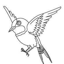 Desenho de um Pardal para colorir online