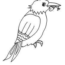 Desenho de um Martim-pescador para colorir online