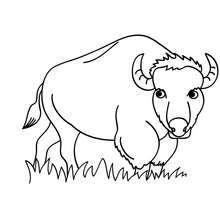 Desenho de um Bisão para colorir