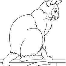 Desenho de um gato  para colorir online