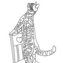 Desenho de um gato brincando para colorir