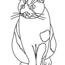 Imagem de um gato para colorir