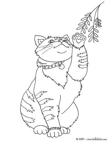 desenhos de animais de estimaÇÃo para colorir desenhos para