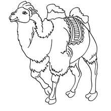 Um Camelo para colorir