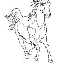 Desenhos Para Colorir De Desenho De Um Cavalo Para Colorir Online