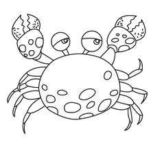 Desenho de um Caranguejo para colorir online