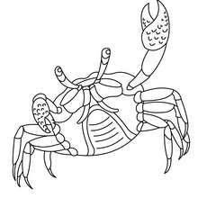 Desenho de um Caranguejo com sua pinça para colorir
