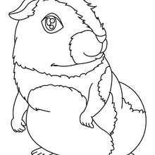Desenho de um Porquinho-da-Índia para colorir