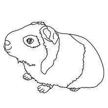 Desenho de um Porquinho-da-Índia para colorir online