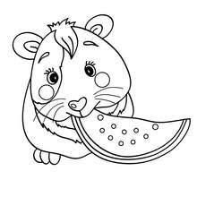 Desenho de um Porquinho-da-Índia comendo para colorir