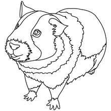 Imagem de um Porquinho-da-Índia para colorir