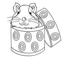 Desenho de um Porquinho-da-Índia dentro de uma caixa para colorir