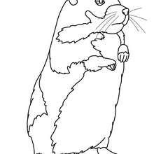 Desenho de um Hamster para colorir online