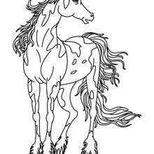Desenhos Para Colorir De Desenho De Um Cavalo Selvagem Para