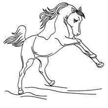 Um belo Cavalo selvagem para colorir e imprimir