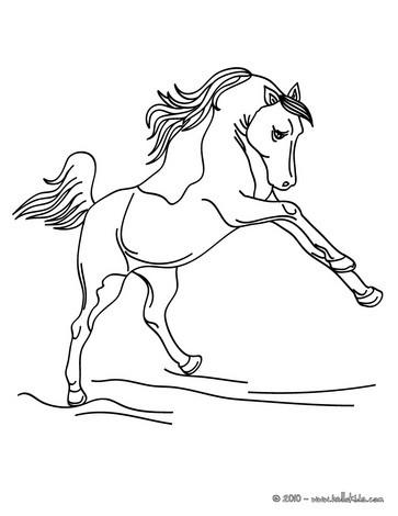 Desenhos Para Colorir De Um Belo Cavalo Selvagem Para Colorir E