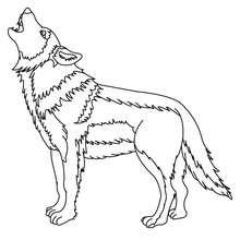 Um lobo para colorir
