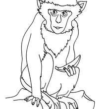 Desenho de um macaco para colorir online