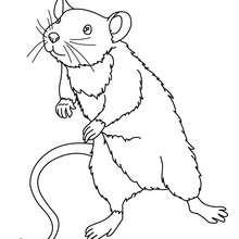 Um ratinho para colorir