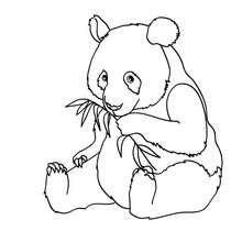 Desenho de um Panda para colorir