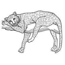 Desenho de uma Pantera para colorir online