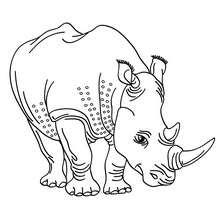 Desenho de um Rinoceronte fofo para colorir online
