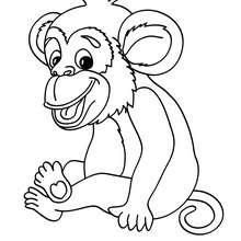 Um macaco para colorir