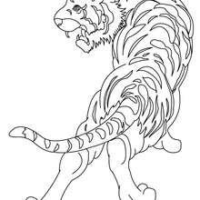 Imagem de uma tigre para colorir