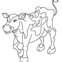 Desenho de uma vaca para colorir