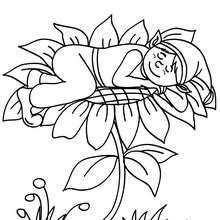 Desenho de um Elfo dormindo em uma flor para colorir