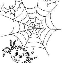 Desenho de uma aranha, uma teia de aranha e morcegos para colorir