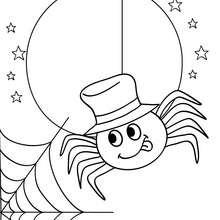 Desenho de uma aranha e uma teia para colorir