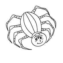 Desenho de uma aranha com oito patas para colorir