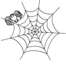 Desenho de uma aranha na sua teia para colorir
